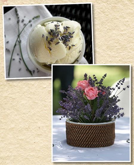 lavenderfarm3