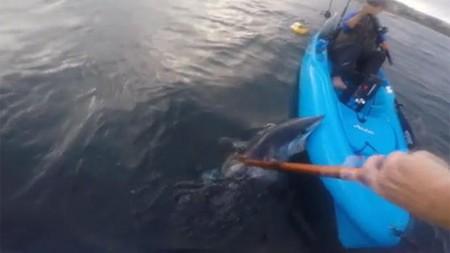 mako-shark-bites-kayak