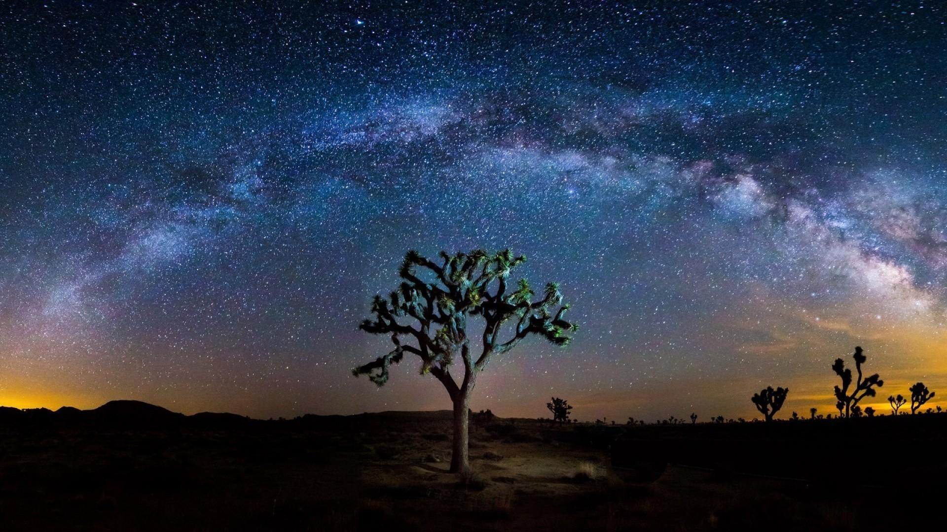 The-Milky-Way-Stargazing-in-California-Joshua-Tree-national-Park