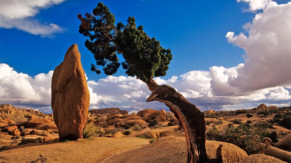 joshua-tree-national-park-334