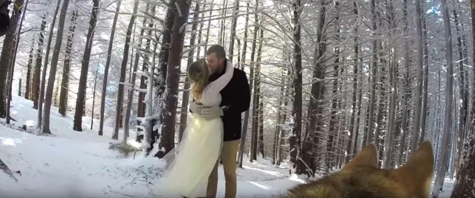 HT_go_pro_wedding_dog_ml_151124_31x13_1600