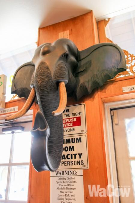 Lucky Elephant (8)