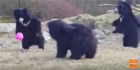 black-bear-balloon002
