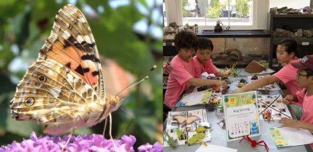 butterfly-season001
