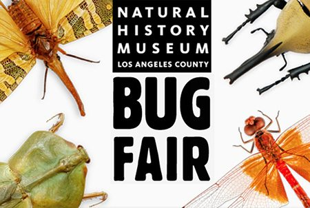 NHM Bug Fair