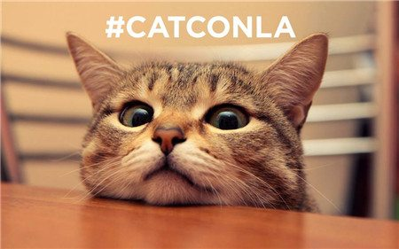 catconla-003