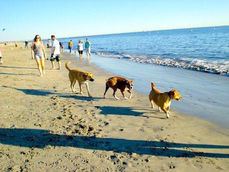 Rosies-dog-beach3