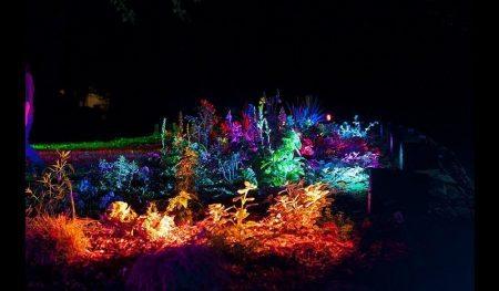 illuminated-plants