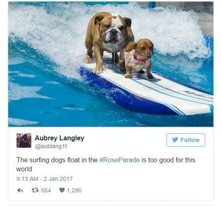 Surfing Dog 1 Mashable