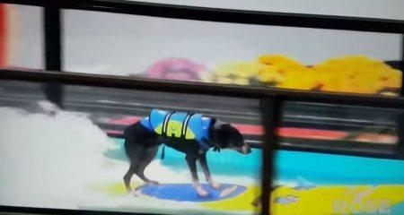 Surfing Dog 4 80s Girl Youtube