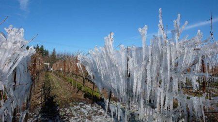 1000x563-de-la-montanya-winery-healdsburg-ca-winter-wineland