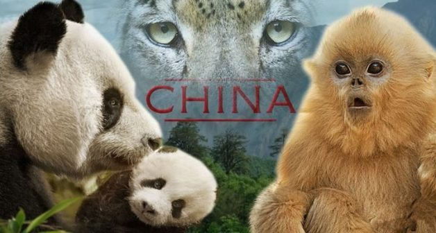 Born in China 1 CCTV