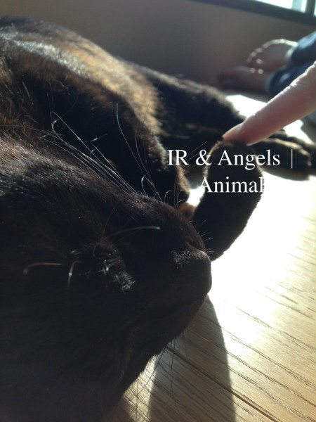 IR & Angelsanimals
