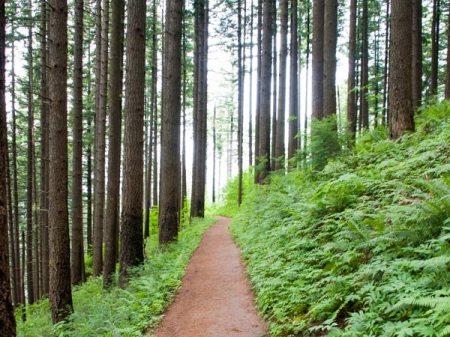 trail_flat