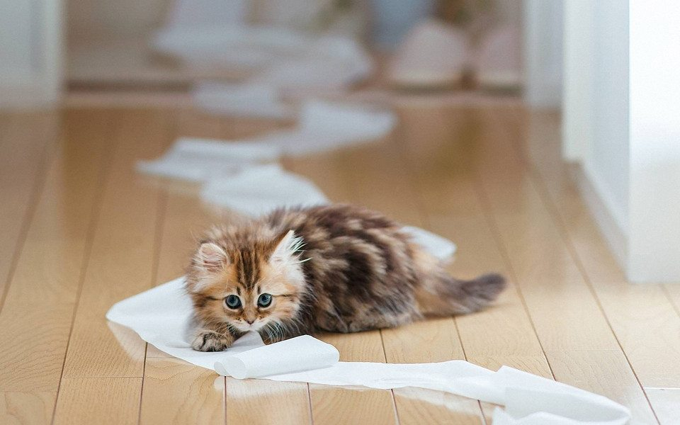 Cat playing toilet paper 1 mamawFr