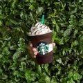 Starbucks Midnight Mint Mocha Frappuccino 1 Starbucks