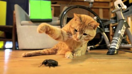cat playing with a bug 1 youtube
