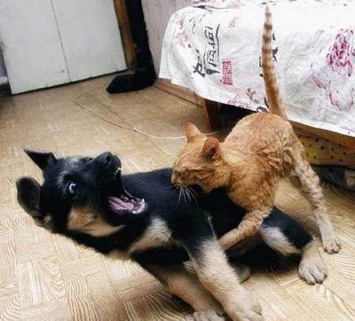 cats and dogs fighting 1 pinterest