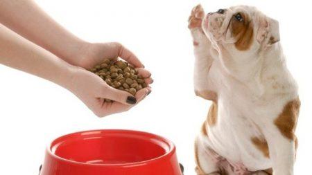 pet owner feeds pet 1 my vet animal hospital