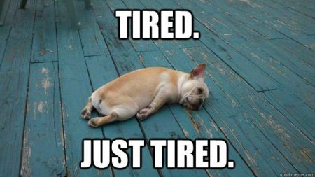 tired-frenchie meme 1 ronis weigh