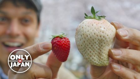 white strawberry 2 only in japan youtube