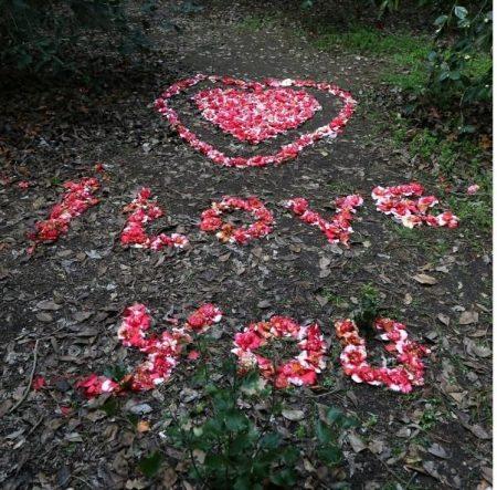 Descanso gardens cherry blossom festival 3 12 3 - Descanso gardens cherry blossom festival ...