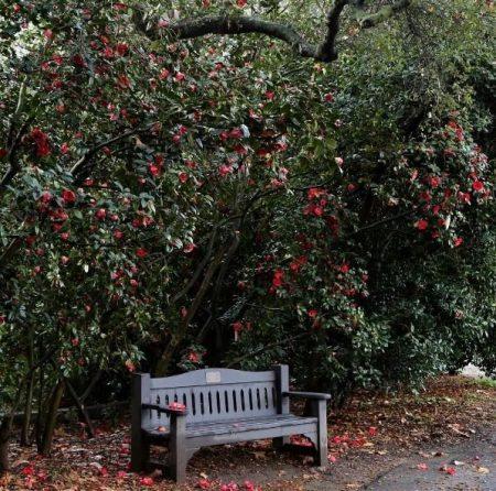 Descanso Gardens Cherry Blossom Festival 3 12 3 13 Wacowla In L A